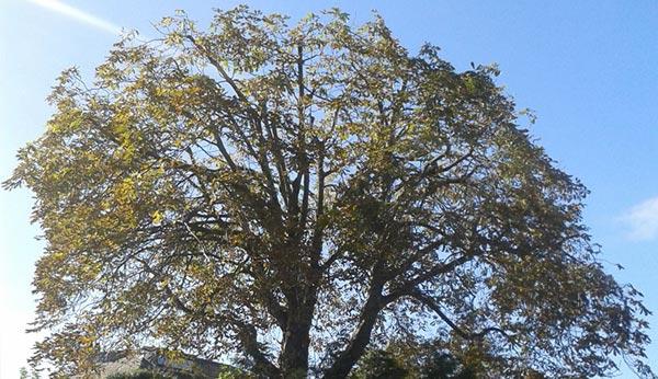 TREE-PRUNING-services-merseyside