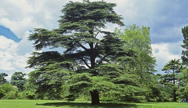 TREE-SURVEYS-services-merseyside