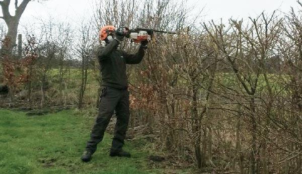 hedgework-services-merseyside