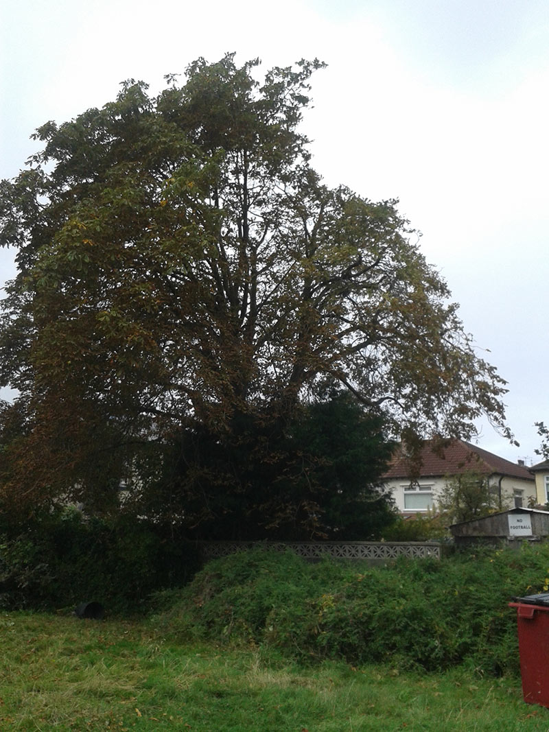 horse-chestnut-reduction,-half-way-through