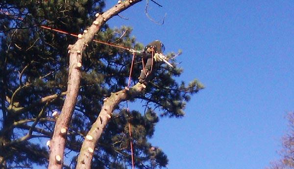 service-tree-felling-meryseyside